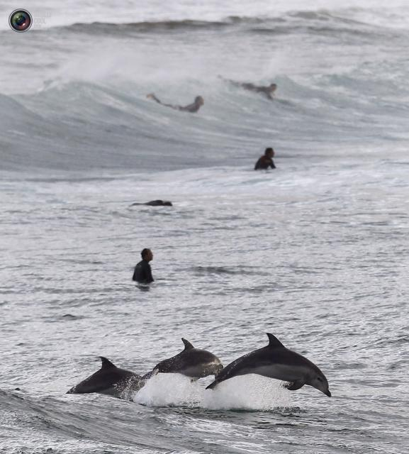 surfing thau
